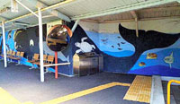 クジラの壁画