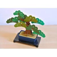 kami―bonsai 松